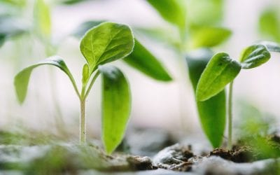 1 John 2:7–14: Growth