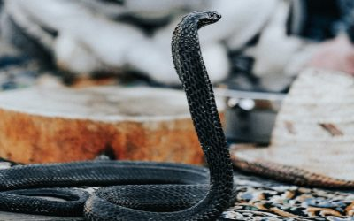 Genesis 4:1–16: The Offspring of the Serpent