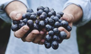 Fruitfulness: A Biblical Theology of Productivity