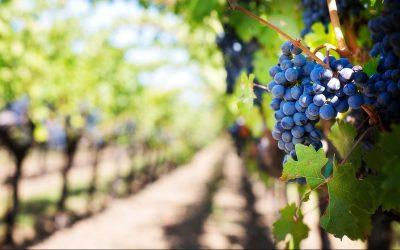 John 15:1–17: The Fruit of Jesus