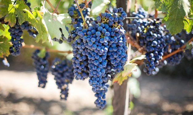 Love: The Fruit that Jesus Demands