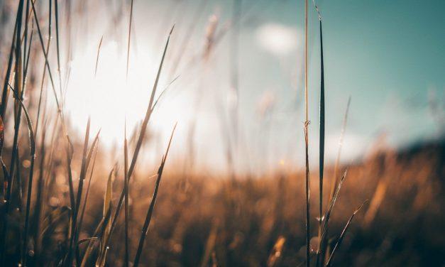 Genesis 21:22–34: The Callings of Abraham