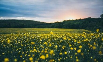 Genesis 23:1–20: The Commerce of Abraham