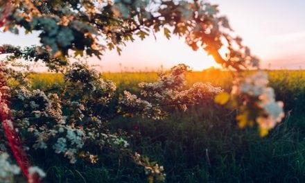 Genesis 8:1–19: New Creation