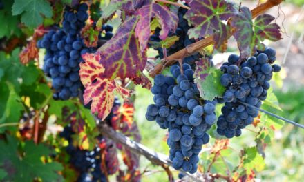 Genesis 41:37–57: Fruitfulness through Affliction